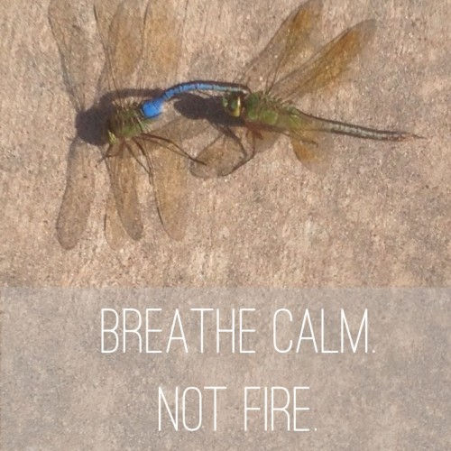 "Motivational Monday – ""Breathe calm not fire"""